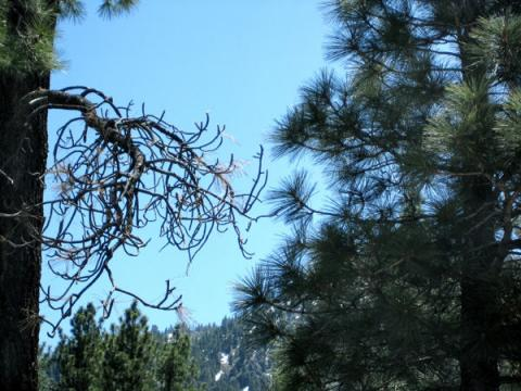 Wrightwood, CA Puzzle 18
