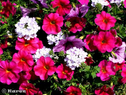 Flowers, Etc. Puzzle 19